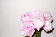 - terrysdiary: Peonies #2 Photo: Terry Richardson