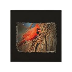 Beautiful Red Cardinal Photographed in the Adirondack Mountains of NY adorns this unique wood canvas design.