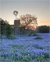 Outside of Poteet, Texas, I found this old windmill in a field of bluebonnets.
