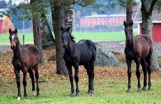Celtas Horses Warmblood Horses, Animals, Celtic, Animales, Animaux, Animal, Animais
