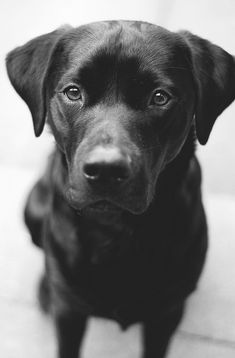 beautiful, beautiful dog!!