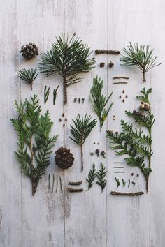 knolling with plants Noel Christmas, Winter Christmas, Christmas Wreaths, Christmas Decorations, Xmas, Holiday Decor, Christmas Presents, Diy Weihnachten, Merry And Bright