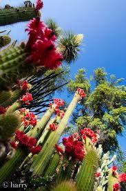 Resultado de imagen para cactus marino