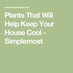 Plants That Will Help Keep Your House Cool - Simplemost