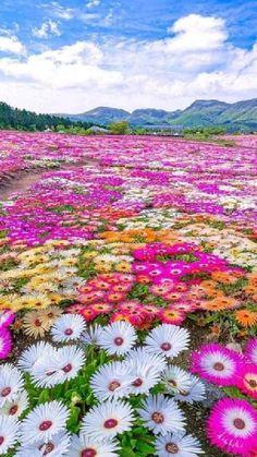 Wallpaper Nature Flowers, Beautiful Landscape Wallpaper, Beautiful Flowers Wallpapers, Beautiful Photos Of Nature, Beautiful Flowers Garden, Scenery Wallpaper, Flowers Nature, Amazing Flowers, Beautiful Roses