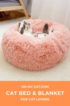 There is no denying the fact that cats love to sleep. Whether lounging, napping or snuggling comfortably against you, cats and sleep go hand in hand.  But did you know that sleeping is vital for your cat's health? Each cat needs a restful and deep sleep in order to live a healthy and full life!  With our new Chatdort ™ bed, we can guarantee that your cat will sleep like a kitten! Cat Products, Cat Accessories, Cat Health, Cool Cats, Snuggles, Bean Bag Chair, Cat Lovers, Kitten, Sleep