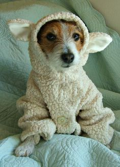 wait a minute...what is that???? I declare ~!!!~ it's no wolf, not that sweet terrier...what a baby doll : )