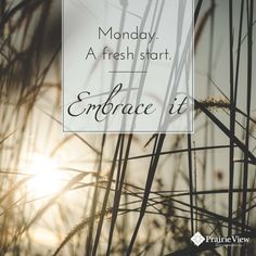 Monday. A fresh start. Embrace it!