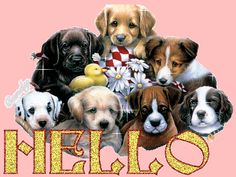 animated hello   transparent hello puppies animated Sticker