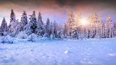 Low sun in winter forest