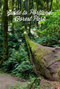 Maybe Zorrah will be up for this.   guide to portland: forest park — passports & pancakes