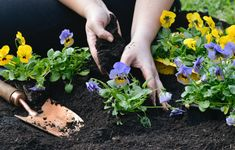 Our soil is what feeds our plants- without it being top notch, we would not have the basis for healthy plants. Find out more about this topic by clicking on the link below. Celery, Herbs, Gardening, Vegetables, Healthy, Plants, Top, Garten, Vegetable Recipes