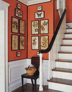 The rich orange walls with dark borders provide a great backdrop for the botanical prints & their dark, simple frames.