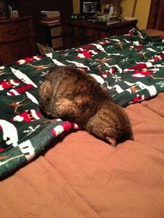 Acho que gato que não faz loucura não pode ser considerado um gato. Mas esses aqui estão num nível bem acima disso. Eles simplesmente esqueceram como ser gato!