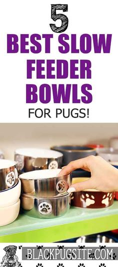What is the best slow feeder bowl for Pugs? Check out some of the most popular ones such as; OurPets, Outward Hound, Frisco and . Adult Pug, Pug Accessories, Old Pug, Slow Feeder, Black Pug, Kinds Of Dogs, Small Dogs, Dog Bowls, Pugs