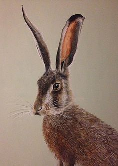 Willow & Stone's Felicity has painted this wonderfully handsome hare.