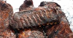 Tuffy Stone literally makes the best ribs in America. Here's howto do it.