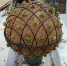 Pots for Succulent Gardens   Two wire baskets tied together with succulents planted all around the ...