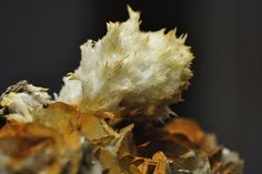 Strontianite and Calcite (by stefan_fotos). These two elements are used for bones and teeth. Maybe Prehistoric animals had fibrous looking teeth like this.