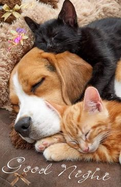 Cute Baby Animals, Animals And Pets, Funny Animals, Cute Animal Pictures, Dog Pictures, Beautiful Cats, Animals Beautiful, Tier Fotos, Cute Creatures