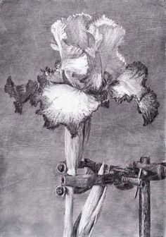 "William Kentridge ""IRIS II"""