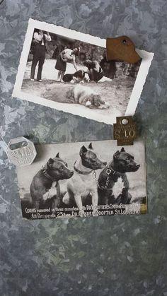 Vintage Dog Tag Magnets Patina Vintage Dog by ElisabethMacBeth, $18.00