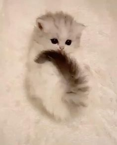 Funny Cute Cats, Cute Baby Cats, Cute Cat Gif, Cute Cats And Kittens, Cute Little Animals, Cute Funny Animals, Cute Dogs, Super Cute Kittens, Baby Kitten Videos
