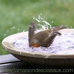 Grande vasque abreuvoir bain d'oiseau en terre cuite émaillée - Diametre: 32 cm - poids 2,3 kg