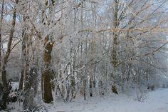 Het berkenbos in de sneeuw. Bij www.hetberkenbos.nl