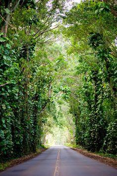 #ridecolorfully through the tunnel of trees to koloa town