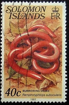 Burrowing Snake Solomon Islands Framed by PassionGiftStampArt