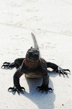 Galapagos Islands-521