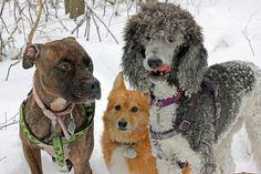 https://flic.kr/p/dFAFWf | Snow Day Hike
