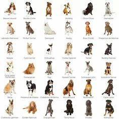 Dog Breeds Chart, Cat Breeds, Puppy Mills, Dog Care Tips, Mans Best Friend, Animals And Pets, Pet Dogs, Puppies, Graphic Illustrations