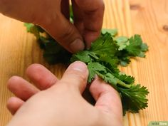 5 Ways to Freeze Cilantro - wikiHow Freezing Cilantro, Middle Eastern Dishes, Growing Veggies, Useful Life Hacks, Parsley, Frozen, Healthy Eating, Herbs, Canning