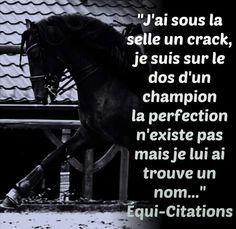 - Art Of Equitation Citation Cool, Equestrian Quotes, Horse Quotes, Pinterest Photos, Horse Love, Horse Riding, Horses, Animals, Explore
