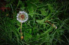 Mi piace quando un #fiore o un piccolo ciuffo di erba crescono attraverso una fessura nel cemento. E' così dannatamente eroico - I like it when a #flower or a little tuft of grass grows through a crack in the concrete. It's so fuckin' heroic - George Carlin -   Buy our liqueurs on www.giardinidamore.com  #giardinidamore #sentiremediterraneo #feelmediterranean #madeinitaly #mixology #mothernature #landscape #lusso #luxury #italiaintavola