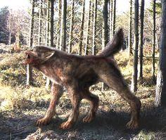 Shapeshifter Werewolf by Lobo Lycan #werewolf #shapeshifter #werewolves #fantasy #art