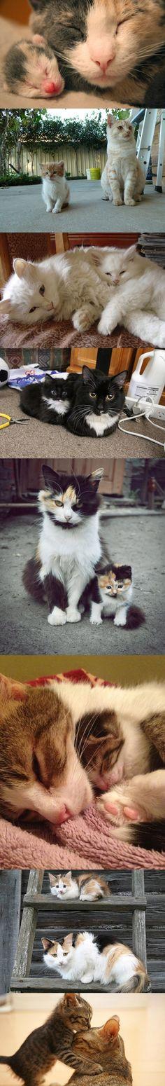 Süße Katzen mit ihrem Nachwuchs | Webfail - Fail Bilder und Fail Videos