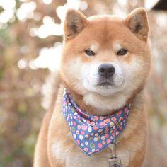 Good morning.おはようございます#焼き上がりました#ダッチパン#ぼくは花を愛する男#早寝早起きの健康生活#イケメン風#金曜日だから元気出そうぜ#pancakes#goodlooking#macho#iloveflowers#beautifuldog#goodmorning#おはよう #Regram via @ryuji513