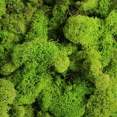 Reindeer Moss in Spring Green | Natural Accessories| Shop Afloral.com