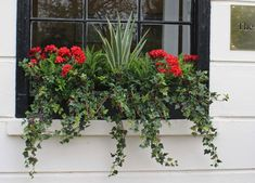 Our Artificial Ivy plants are so life like that people mistake them for the real thing. These plastic plants are manufactured using exterior grade and uv stable materials. Window Box Plants, Window Box Flowers, Window Planter Boxes, Fake Flowers, Plants For Planters, Ivy Plants, Faux Plants, Flower Planters, Artificial Flowers Outdoors