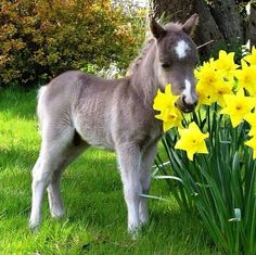 Happy First Day of Spring! #Minihorse