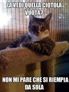 meme italiano animali divertenti che fanno ridere scherzosi da scaricare gratis per whatsapp 195759