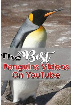 The Best Penguin Videos on YouTube for kindergarten, first and second grade students First Youtube Video Ideas, Penguin Videos, All About Penguins, Primary Classroom, Second Grade, Kindergarten, January, Students, Preschool