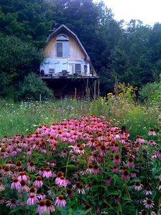 beautiful field of flowers