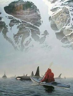 Kayaking with killer Whales in Alaska
