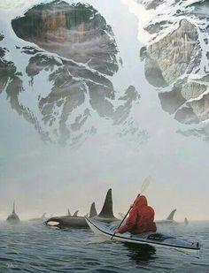 Kayaking with killer Whales in Alaska