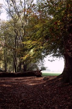 Brunssumerheide, Zuid-Limburg.