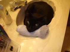 Coal Bear laying in the sink in the bathroom.  He is using a pair of Eric's socks for a pillow, now doesn't he look comfy??